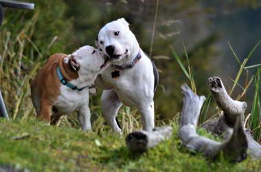 sund leg hund