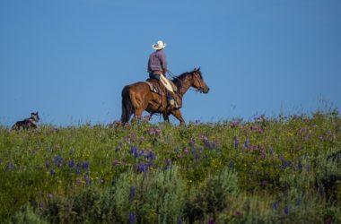 mand på hest